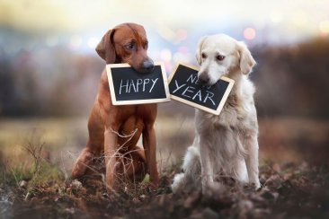 happy-new-year-dogs